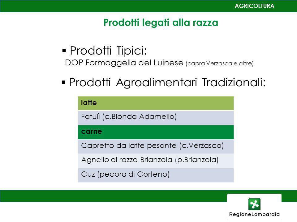 Prodotti legati alla razza Prodotti Agroalimentari Tradizionali: latte Fatulì (c.Bionda Adamello) carne Capretto da latte pesante (c.Verzasca) Agnello