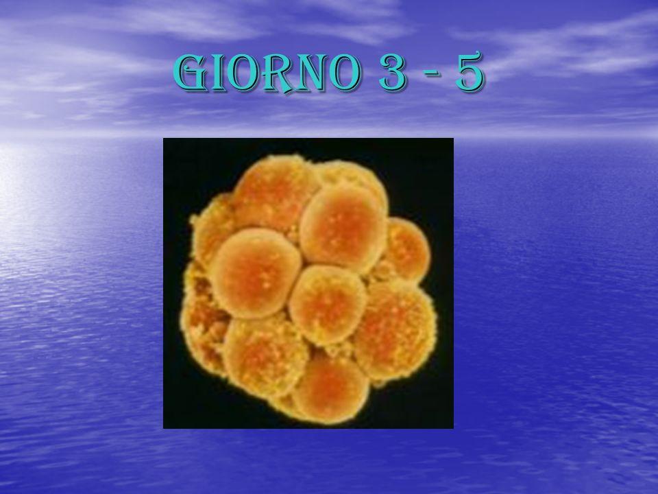 GIORNO 5 – 7