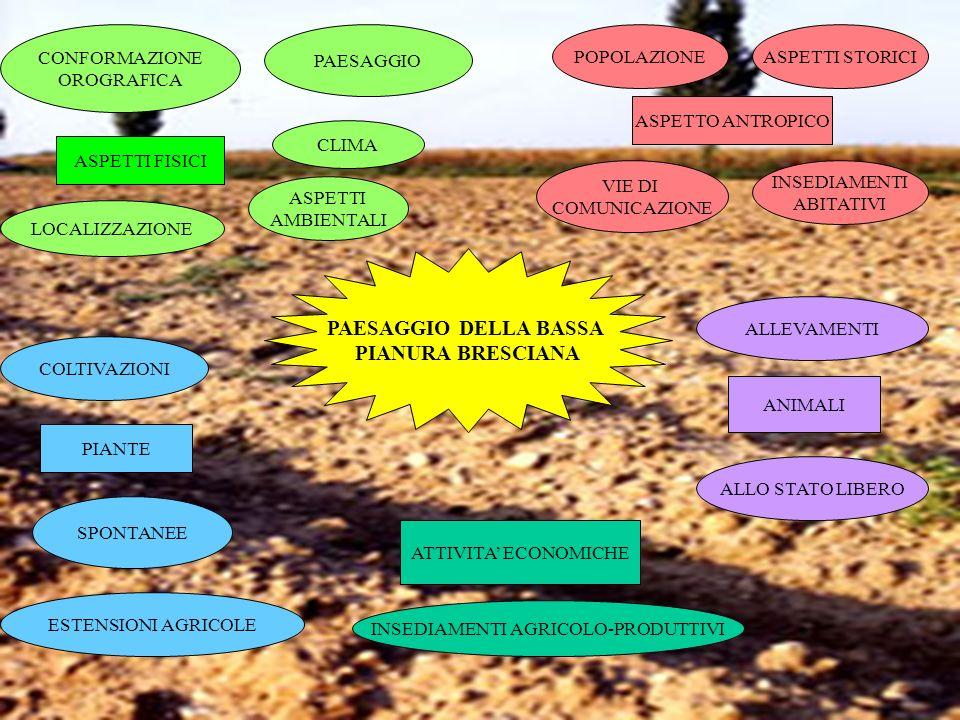 PAESAGGIO DELLA BASSA PIANURA BRESCIANA CONFORMAZIONE OROGRAFICA PAESAGGIO ASPETTI FISICI LOCALIZZAZIONE CLIMA ASPETTO ANTROPICO POPOLAZIONEASPETTI ST