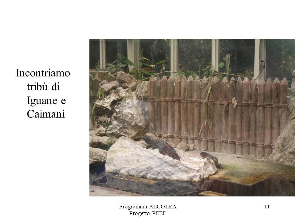 Programma ALCOTRA Progetto PEEF 11 Incontriamo tribù di Iguane e Caimani