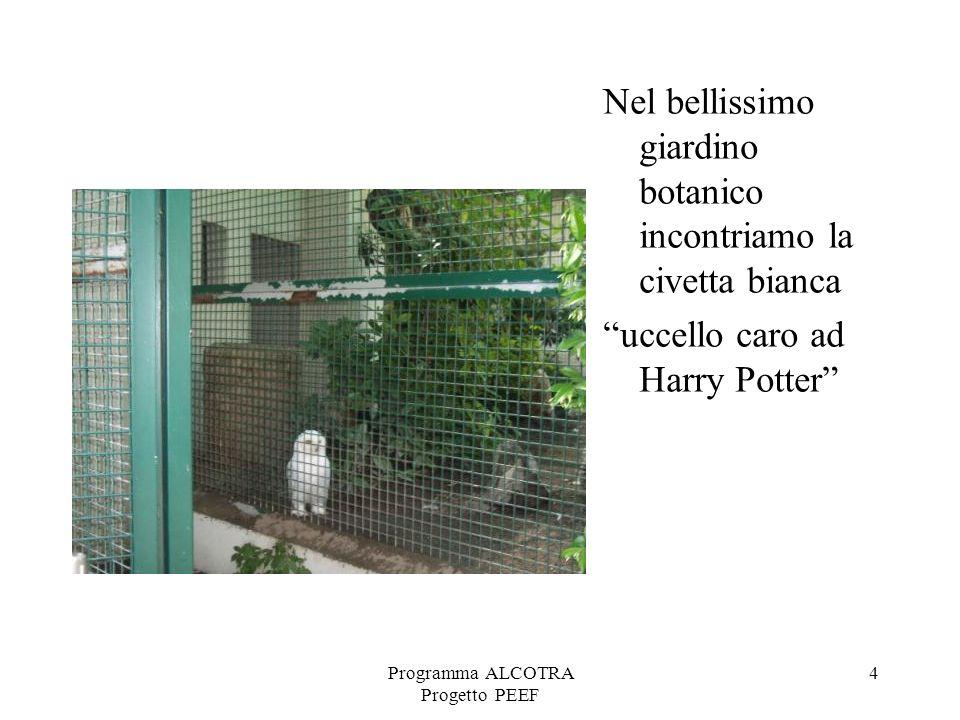 Programma ALCOTRA Progetto PEEF 4 Nel bellissimo giardino botanico incontriamo la civetta bianca uccello caro ad Harry Potter