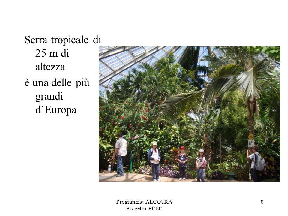 8 Serra tropicale di 25 m di altezza è una delle più grandi dEuropa
