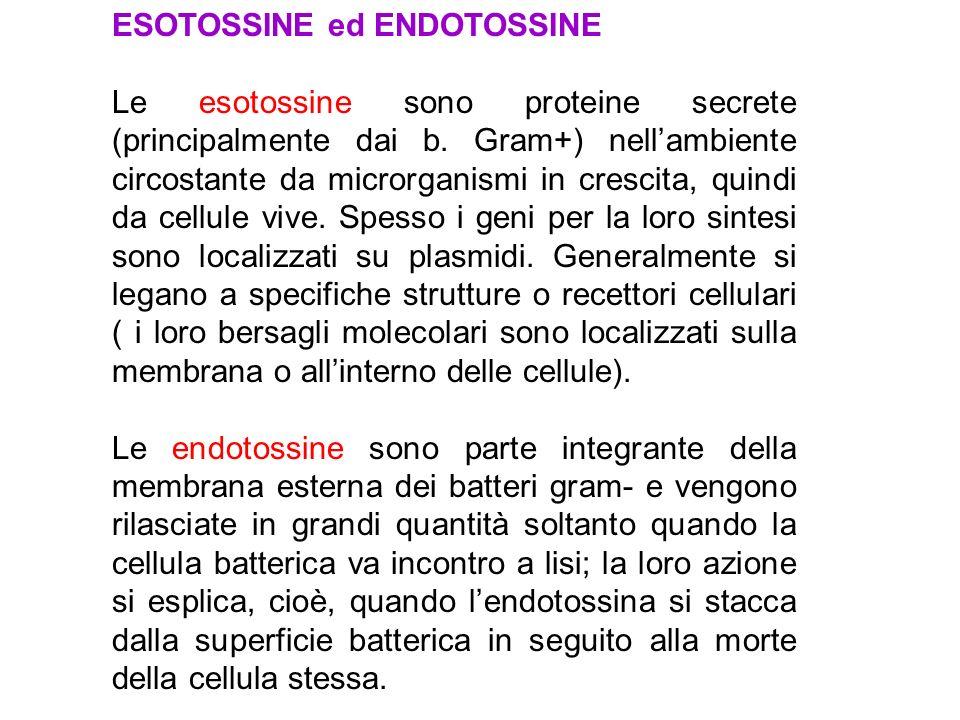 ESOTOSSINE ed ENDOTOSSINE Le esotossine sono proteine secrete (principalmente dai b.