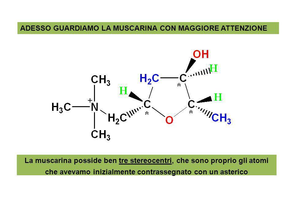 ADESSO GUARDIAMO LA MUSCARINA CON MAGGIORE ATTENZIONE La muscarina posside ben tre stereocentri, che sono proprio gli atomi che avevamo inizialmente c