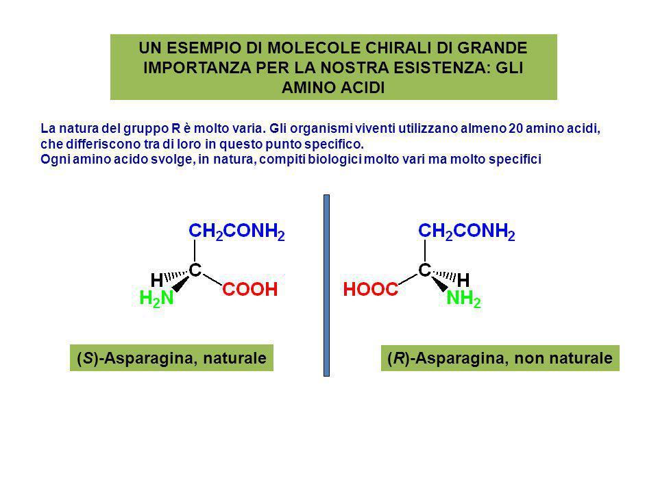 UN ESEMPIO DI MOLECOLE CHIRALI DI GRANDE IMPORTANZA PER LA NOSTRA ESISTENZA: GLI AMINO ACIDI (S)-Asparagina, naturale (R)-Asparagina, non naturale La