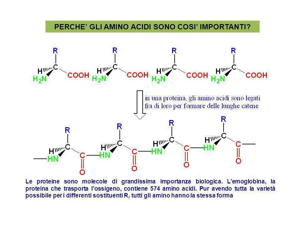 PERCHE GLI AMINO ACIDI SONO COSI IMPORTANTI? Le proteine sono molecole di grandissima importanza biologica. Lemoglobina, la proteina che trasporta los