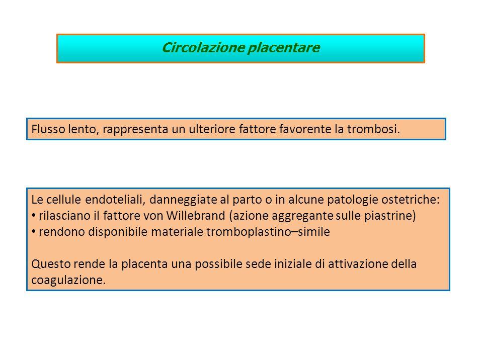 Circolazione placentare Le cellule endoteliali, danneggiate al parto o in alcune patologie ostetriche: rilasciano il fattore von Willebrand (azione ag