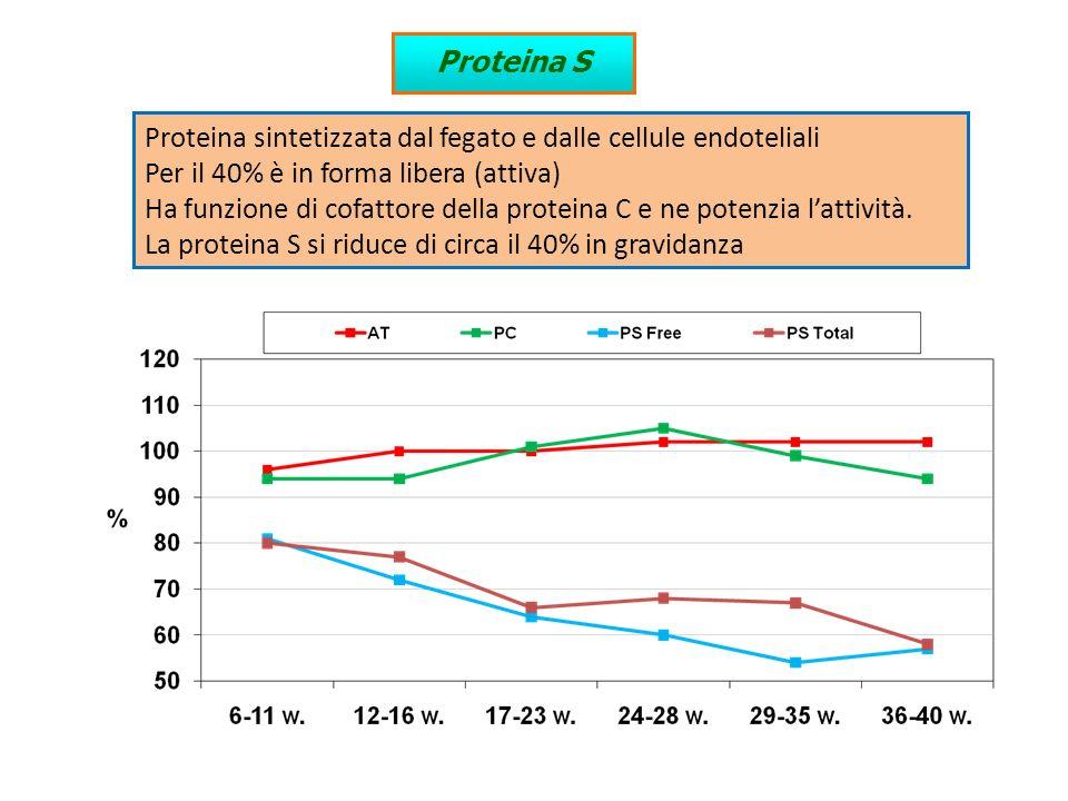 Proteina S Proteina sintetizzata dal fegato e dalle cellule endoteliali Per il 40% è in forma libera (attiva) Ha funzione di cofattore della proteina
