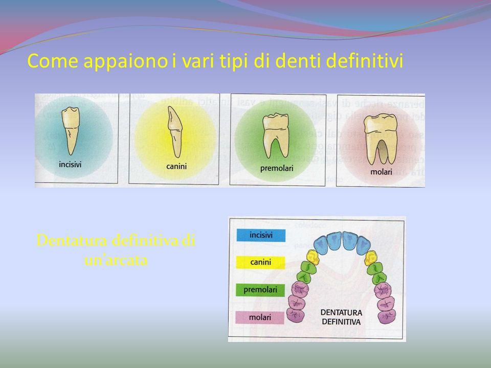 I denti decidui o da latte La formazione della nostra dentatura inizia nei primi mesi di vita con leruzione dei primi denti da latte. Questa dentatura