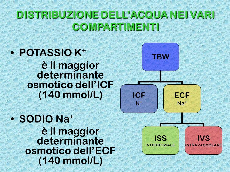 DISTRIBUZIONE DELLACQUA NEI VARI COMPARTIMENTI POTASSIO K + è il maggior determinante osmotico dellICF (140 mmol/L) SODIO Na + è il maggior determinan