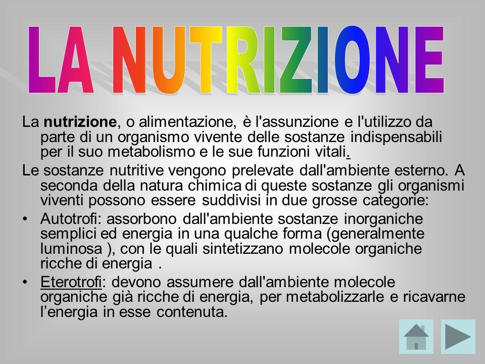 La nutrizione, o alimentazione, è l'assunzione e l'utilizzo da parte di un organismo vivente delle sostanze indispensabili per il suo metabolismo e le