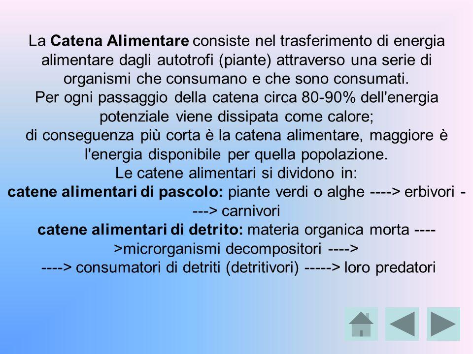 La Catena Alimentare consiste nel trasferimento di energia alimentare dagli autotrofi (piante) attraverso una serie di organismi che consumano e che s