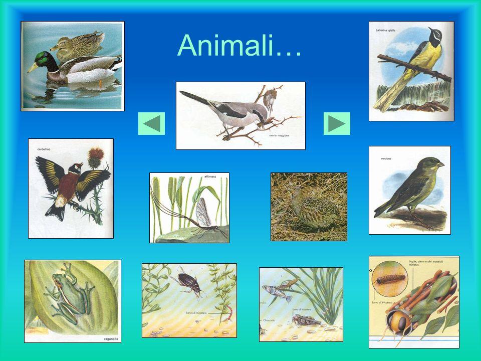 Animali…