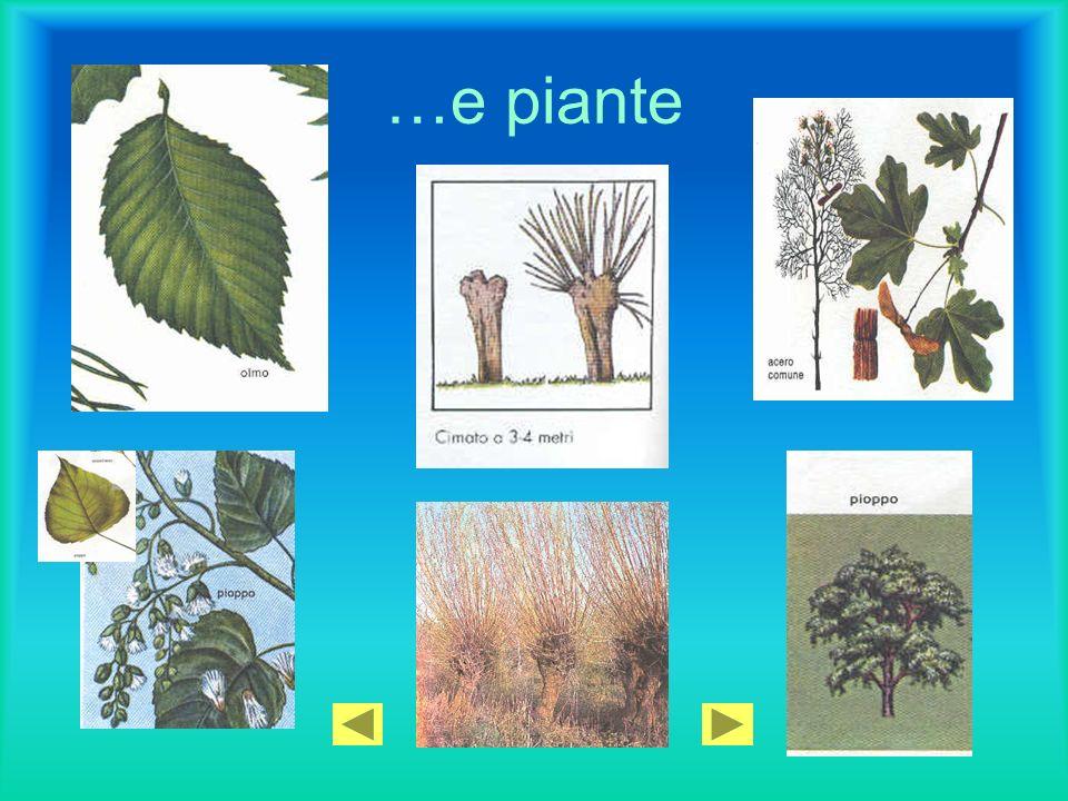 …e piante