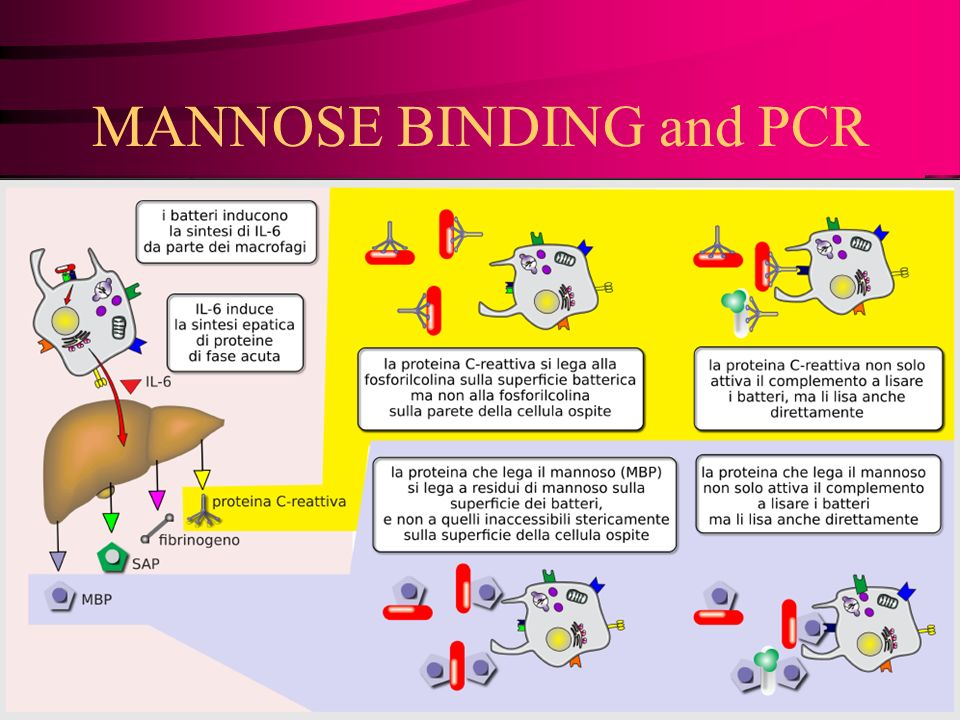 MANNOSE BINDING and PCR
