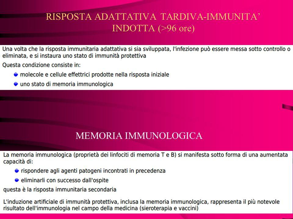 INTERFERONI: proteine antivirali prodotte dai linfociti dietro stimolo