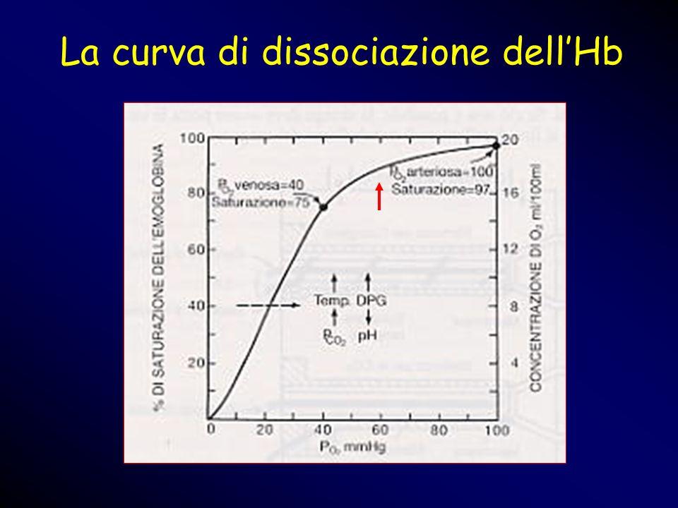 La curva di dissociazione dellHb