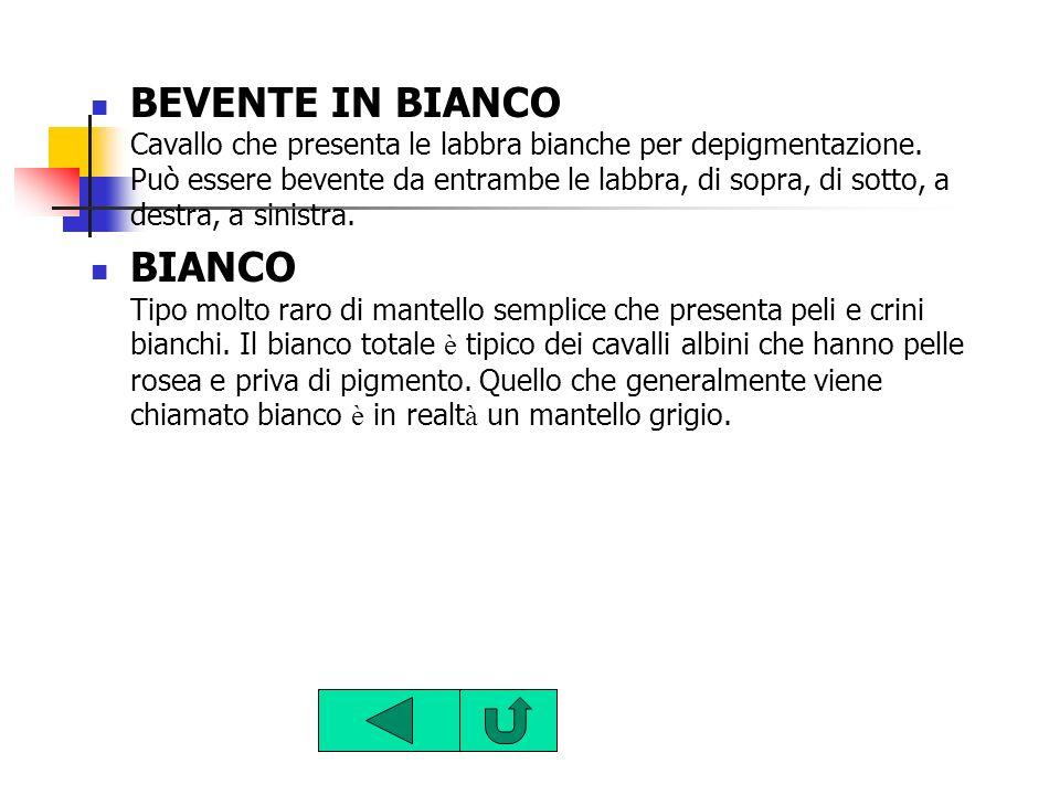 BEVENTE IN BIANCO Cavallo che presenta le labbra bianche per depigmentazione. Può essere bevente da entrambe le labbra, di sopra, di sotto, a destra,
