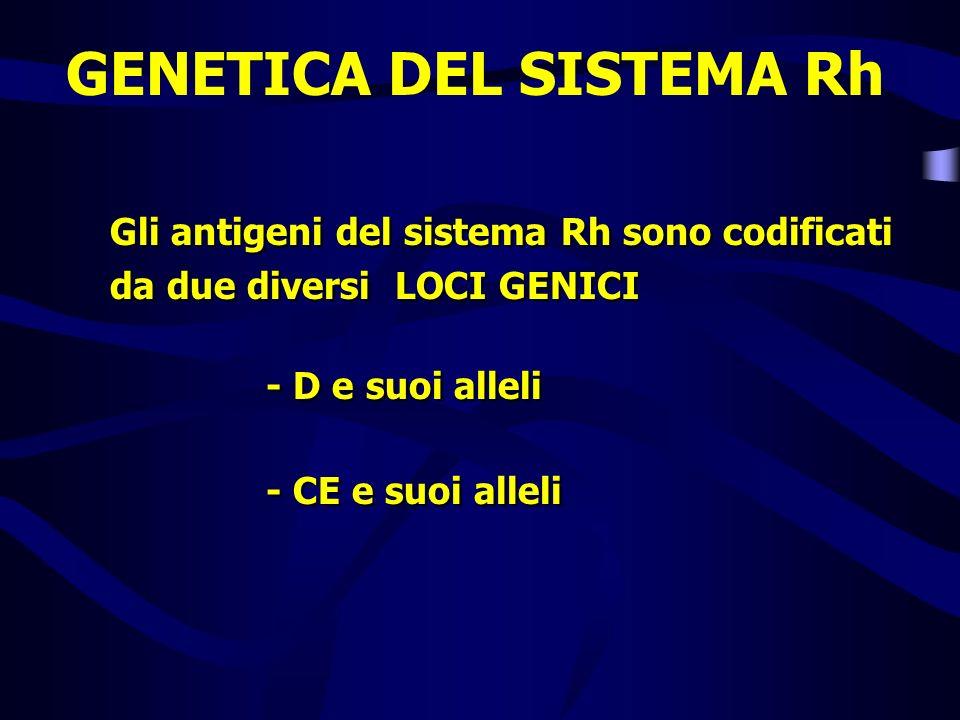 Gli antigeni del sistema Rh sono codificati da due diversi LOCI GENICI - D e suoi alleli - CE e suoi alleli Gli antigeni del sistema Rh sono codificat
