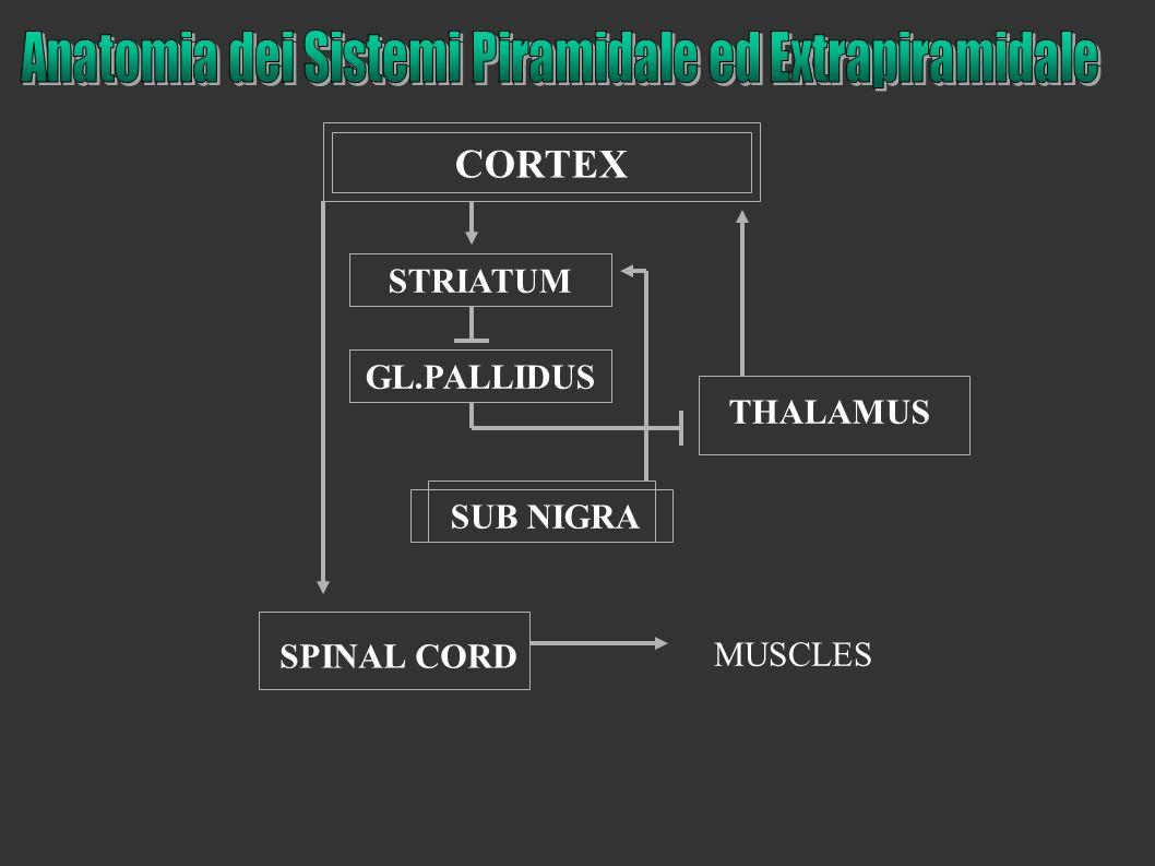 CORTEX SPINAL CORD THALAMUS STRIATUM GL.PALLIDUS SUB NIGRA MUSCLES