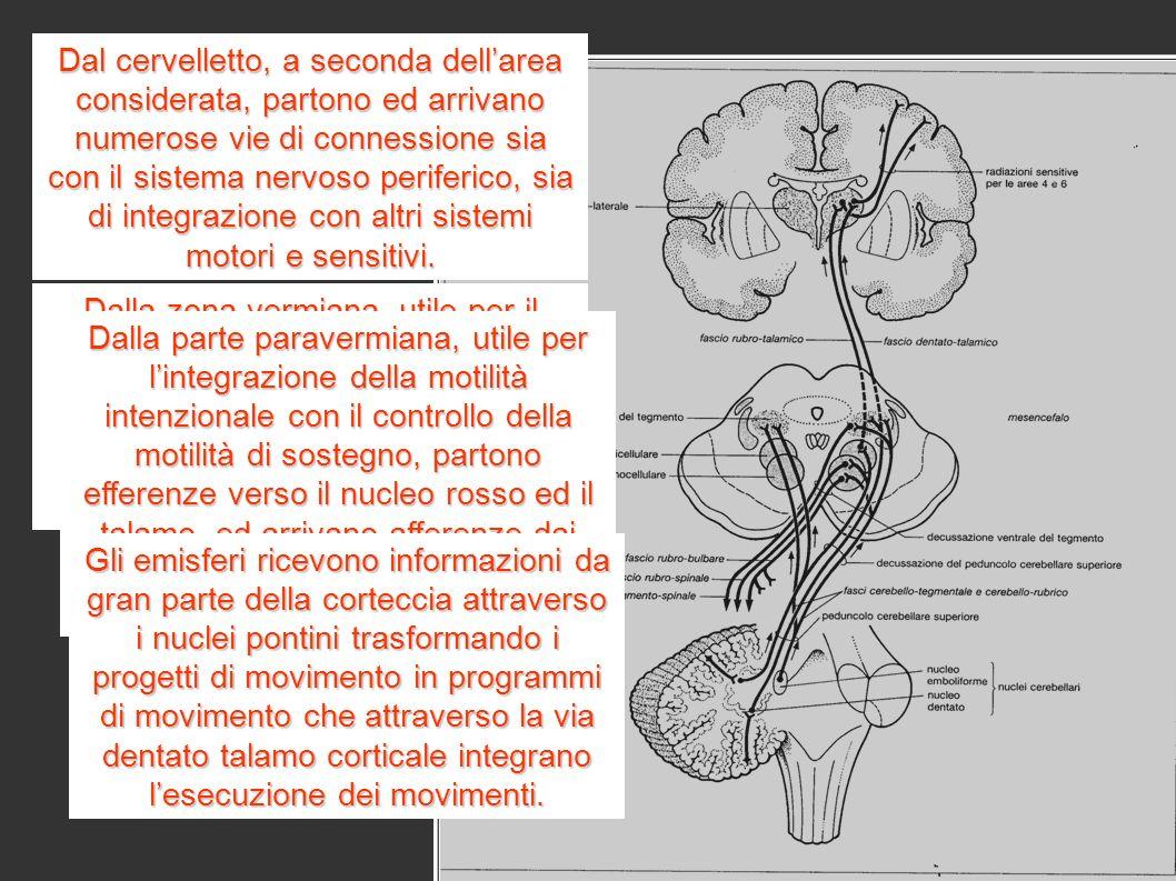 Dal cervelletto, a seconda dellarea considerata, partono ed arrivano numerose vie di connessione sia con il sistema nervoso periferico, sia di integrazione con altri sistemi motori e sensitivi.