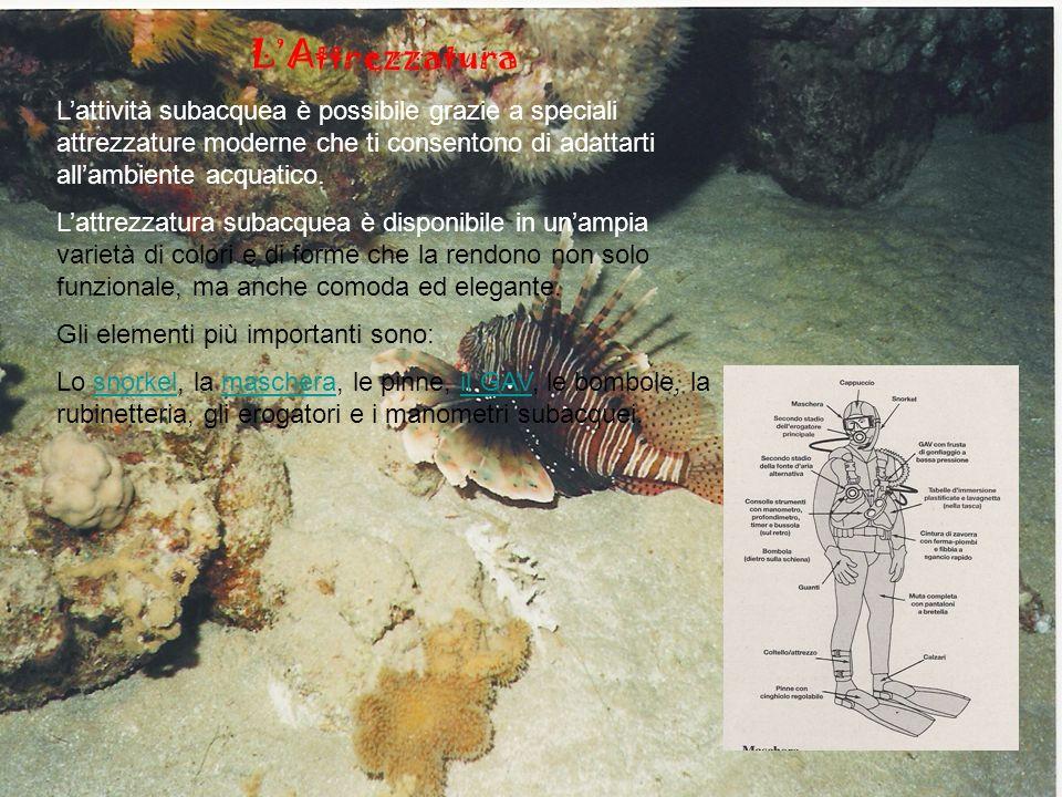LAttrezzatura Lattività subacquea è possibile grazie a speciali attrezzature moderne che ti consentono di adattarti allambiente acquatico.