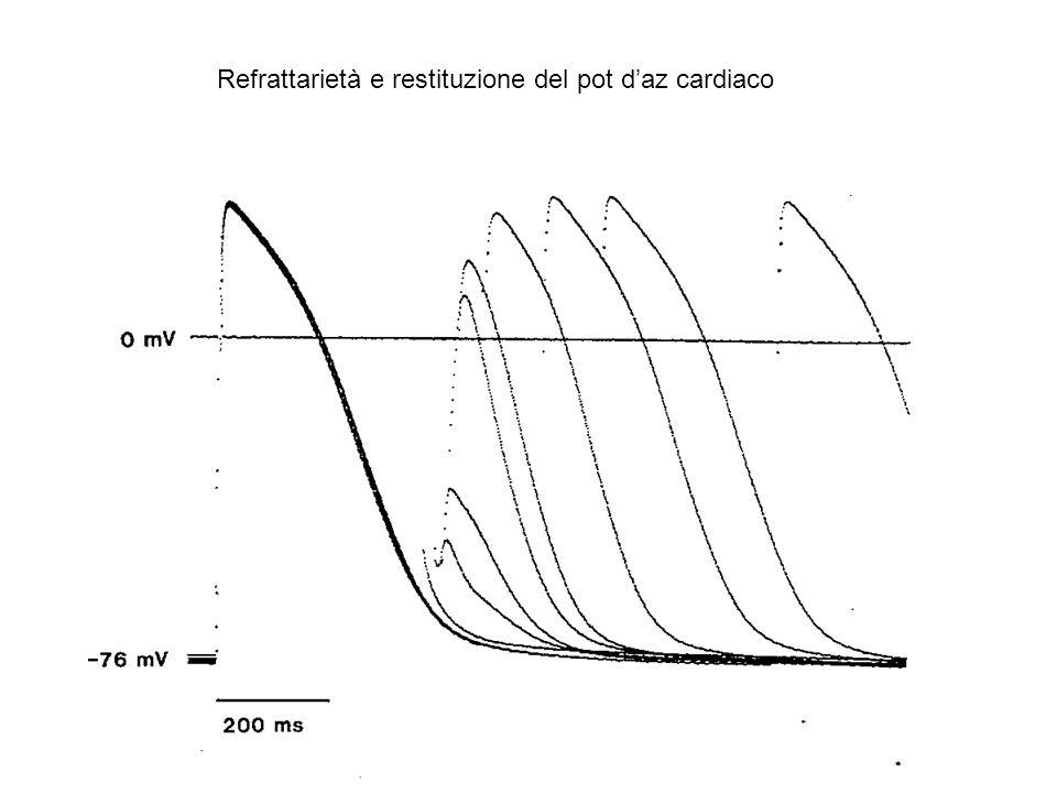 Refrattarietà e restituzione del pot daz cardiaco