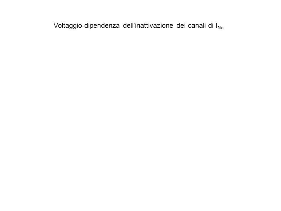 Voltaggio-dipendenza dellinattivazione dei canali di I Na