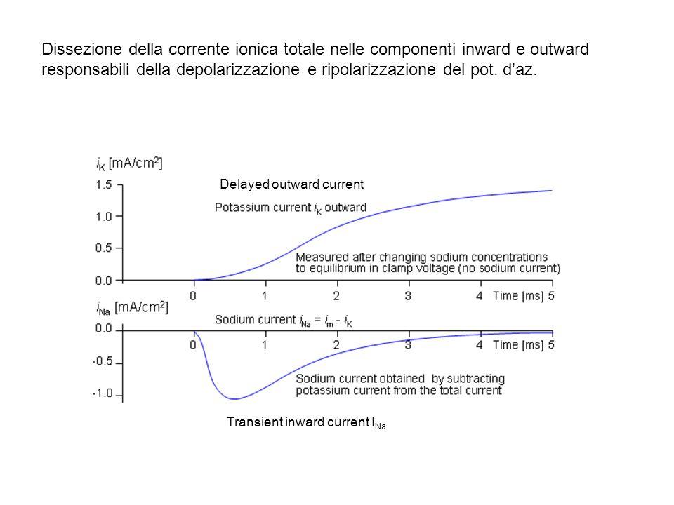 Dissezione della corrente ionica totale nelle componenti inward e outward responsabili della depolarizzazione e ripolarizzazione del pot. daz. Delayed