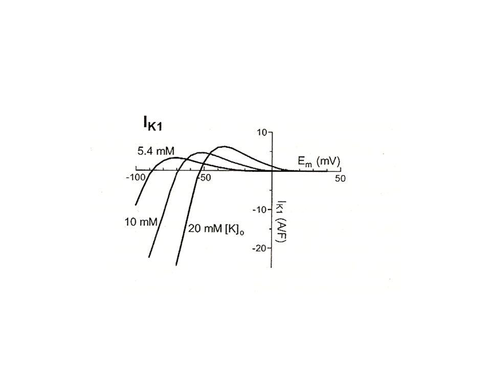 I to Transient Outward Currents -Gruppo eterogeneo di correnti E m e [Ca 2+ ]-dipendenti.