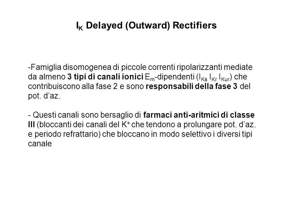 I K Delayed (Outward) Rectifiers -Famiglia disomogenea di piccole correnti ripolarizzanti mediate da almeno 3 tipi di canali ionici E m -dipendenti (I