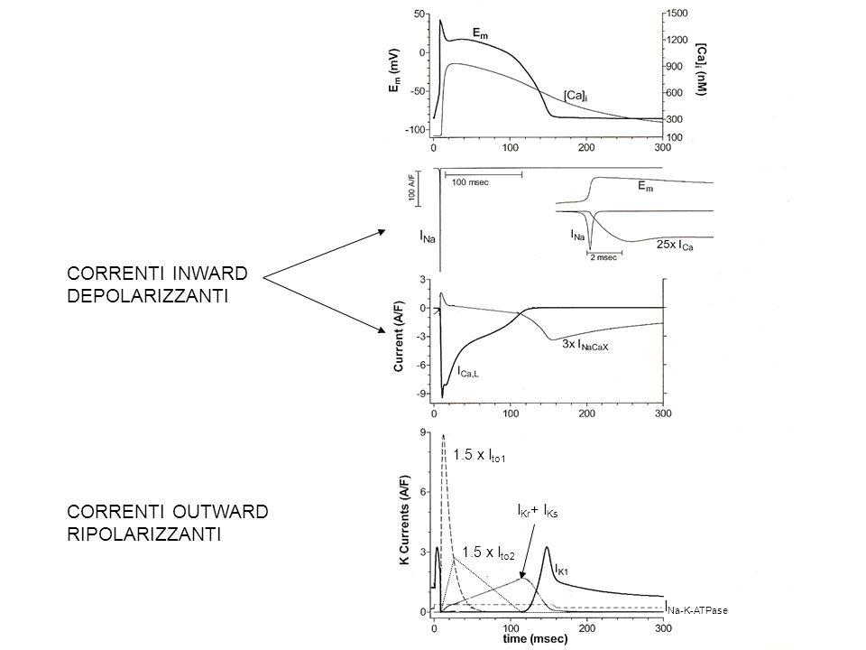 PRINCIPALI MECCANISMI DI MEMBRANA CHE GENERANO CORRENTI IONICHE NEL MIOCARDIO DI LAVORO Canali ionici: Voltaggio-dipendenti: I inward : I Na, I Ca-L I outward : I K1, I to1, I Kur, I Kr, I Ks Ligand gated : I outward : I K(Ach), I K(ATP) Altre macromolecole: Scambiatori : I inward : I Na/Ca di membrana Pompe attive : I outward : I Na-K ATPase Le conduttanze (e le correnti) ioniche che si attivano durante gran parte del potenziale dazione cardiaco sono molto modeste.