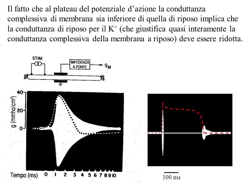 Il fatto che al plateau del potenziale dazione la conduttanza complessiva di membrana sia inferiore di quella di riposo implica che la conduttanza di