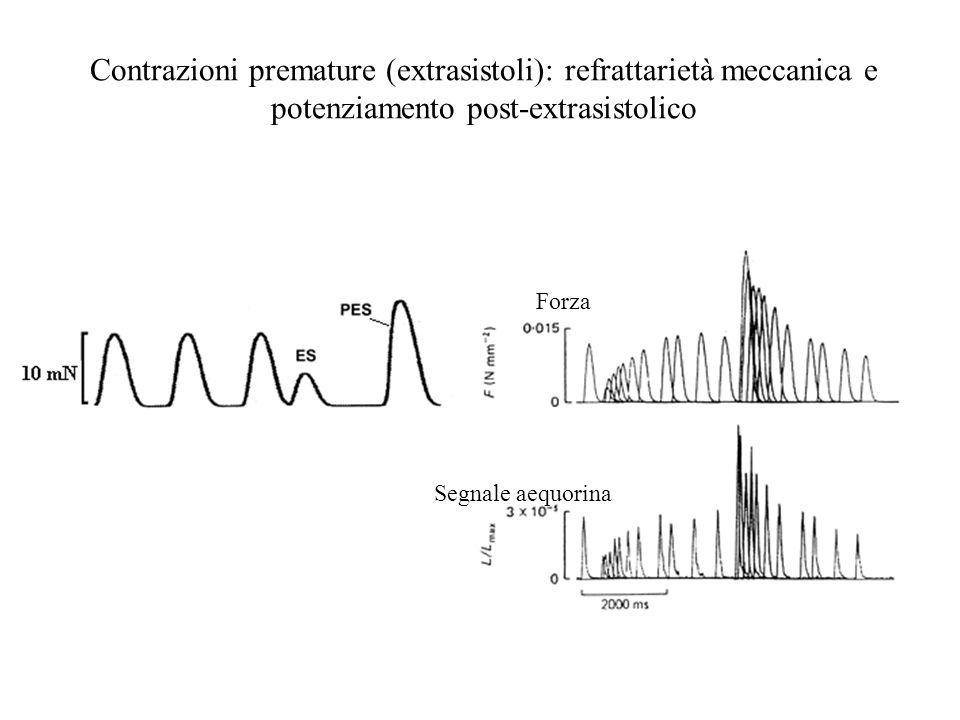 Contrazioni premature (extrasistoli): refrattarietà meccanica e potenziamento post-extrasistolico Forza Segnale aequorina