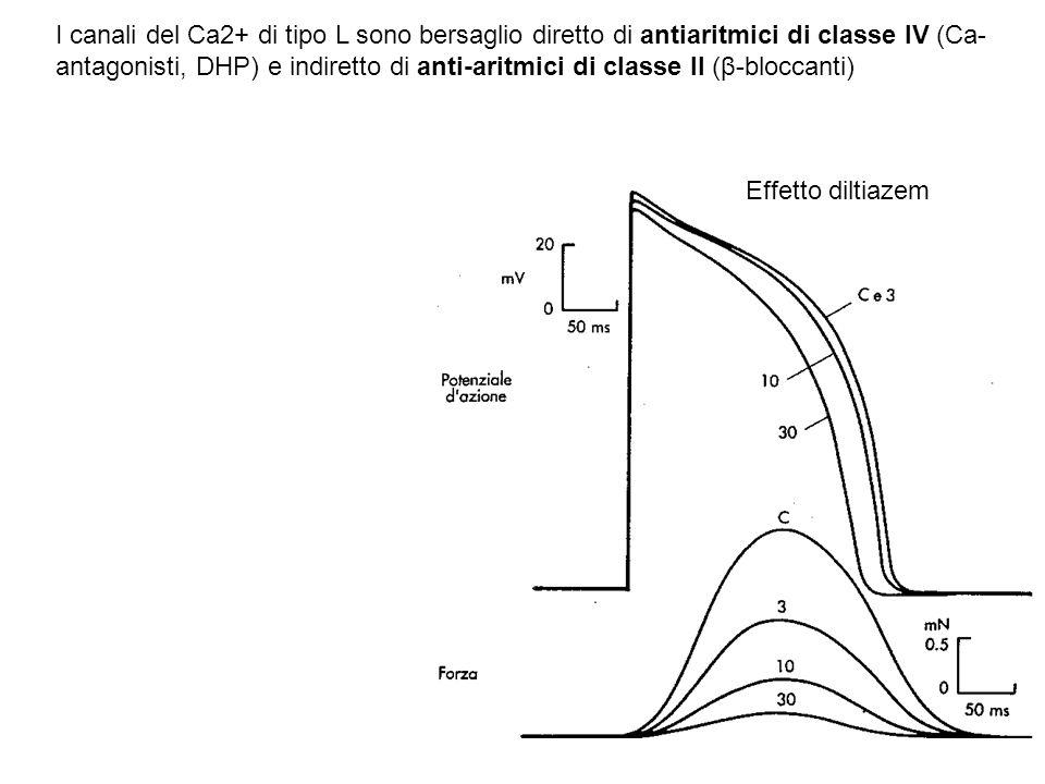 I canali del Ca2+ di tipo L sono bersaglio diretto di antiaritmici di classe IV (Ca- antagonisti, DHP) e indiretto di anti-aritmici di classe II (β-bl