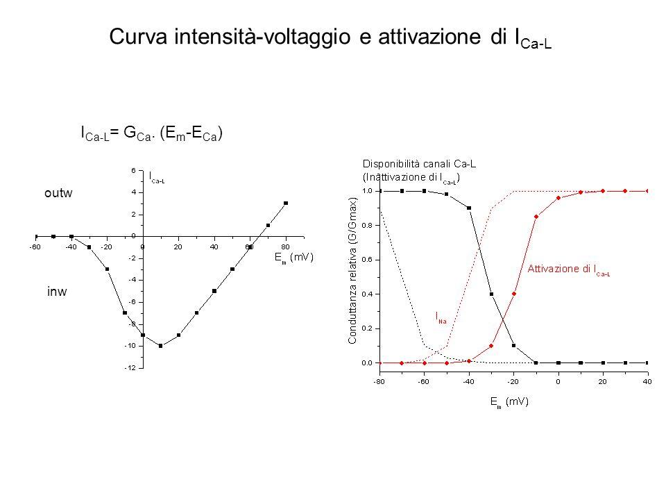 Gran parte del Ca 2+ necessario per la contrazione del m.