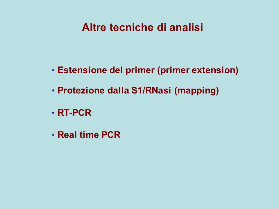 Altre tecniche di analisi Estensione del primer (primer extension) Protezione dalla S1/RNasi (mapping) RT-PCR Real time PCR