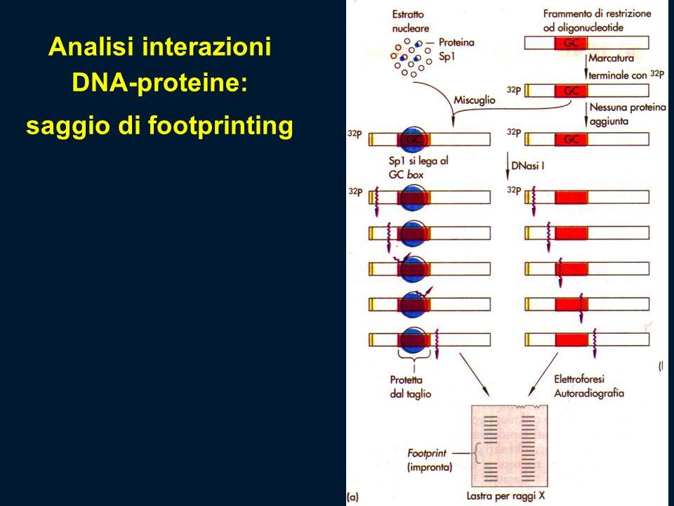 Analisi interazioni DNA-proteine: saggio di footprinting