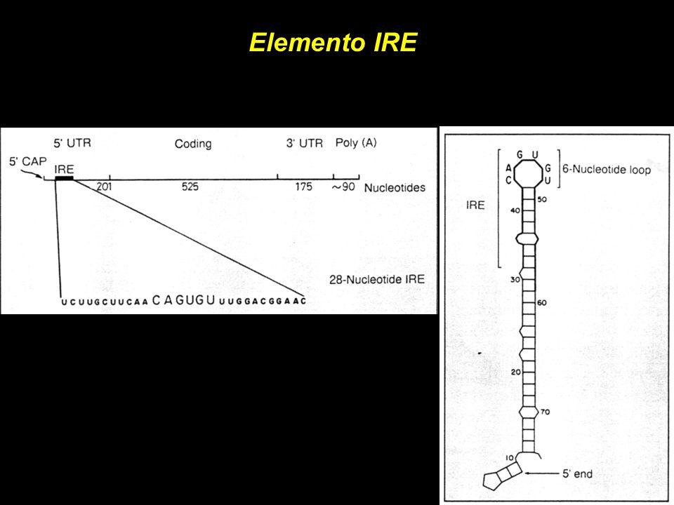 Elemento IRE