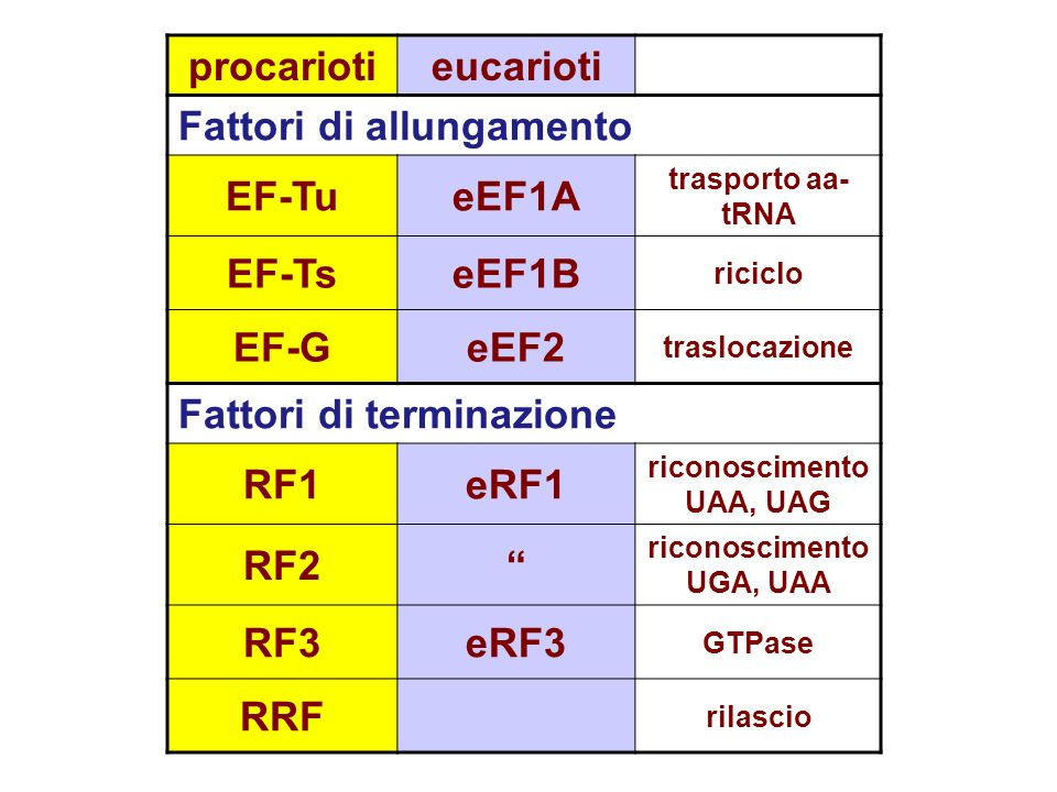 Initiation FactorsActivity prokaryoteseukaryotes IF3eIF-1 Fidelity of AUG codon recognition IF1eIF-1A Facilitate Met-tRNAiMet binding to small subunit eIF-2 Ternary complex formation eIF-2B (GEF) GTP/GDP exchange during eIF-2 recycling eIF-3 (12 subunits) Ribosome antiassociation, binding to 40S eIF-4F (4E, 4A, 4G) mRNA binding to 40S, RNA helicase activity eIF-4A ATPase-dependent RNA helicase eIF-4E 5 cap recognition eIF-4G Scaffold for of eIF-4E and -4A eIF-4B Stimulates helicase, binds with eIF-4F eIF-4H Similar to eIF4B eIF-5 Release of eIF-2 and eIF-3, GTPase IF2eIF5B Subunit joining eIF-6 Ribosome subunit antiassociation
