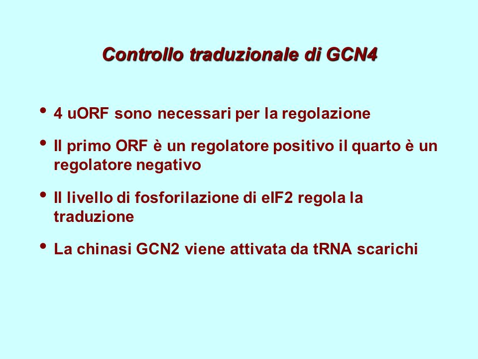 Controllo traduzionale di GCN4 4 uORF sono necessari per la regolazione Il primo ORF è un regolatore positivo il quarto è un regolatore negativo Il livello di fosforilazione di eIF2 regola la traduzione La chinasi GCN2 viene attivata da tRNA scarichi