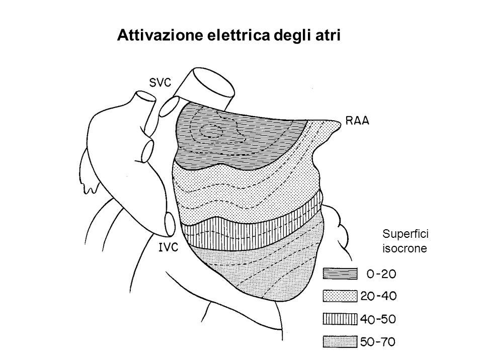 CONDUZIONE A-V 1- Nodo AV e tronco comune del fascio di His sono lunica via che consente la propagazione del PA tra atri e ventricoli.