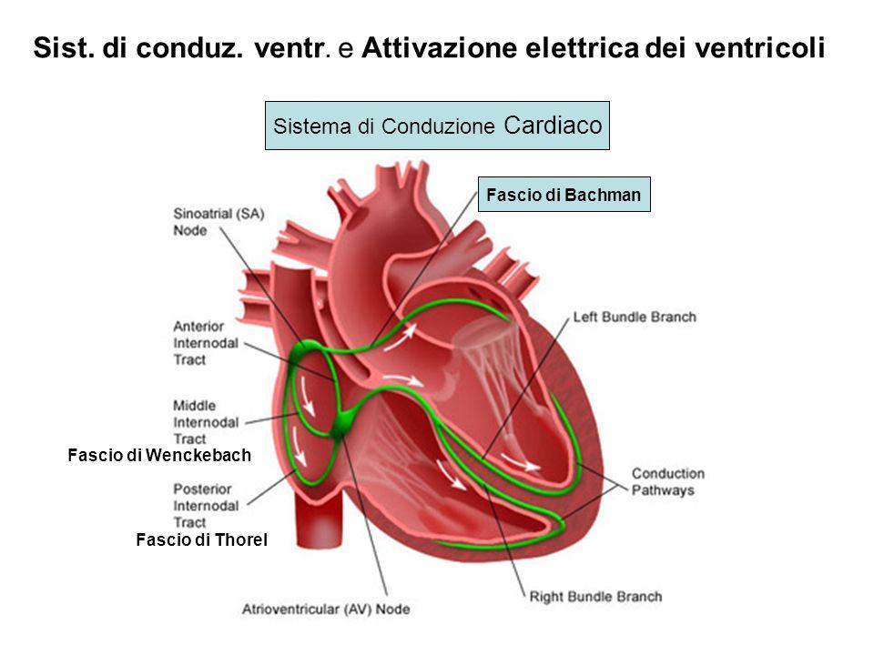 Attivazione elettrica dei ventricoli Ant. Post. Dx. Superfici isocrone