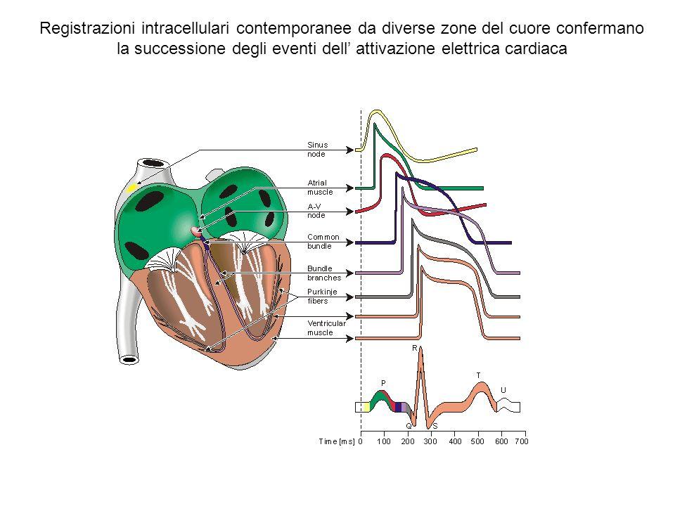 ECG Strumento semplice non invasivo di grande utilità diagnostica.
