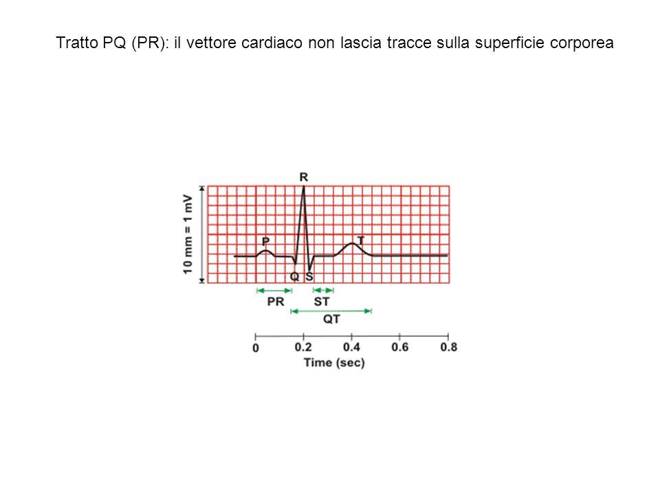 La sequenza spaziale e temporale dellattivazione elettrica del cuore è determinata da proprietà elettrofisiologiche (differenze nella velocità di conduzione del PA nei diversi tipi cellulari del cuore) e morfologiche (distribuzione del sistema di conduzione; presenza dello scheletro fibroso; orientamento dei fasci miocardici).