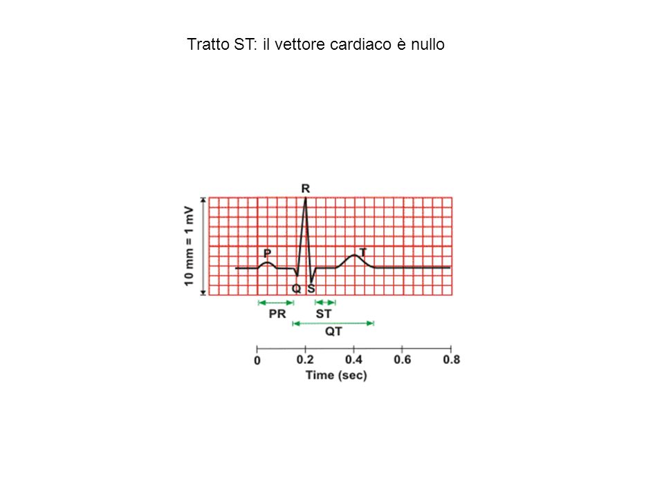 Registrazioni intracellulari contemporanee da diverse zone del cuore confermano la successione degli eventi dell attivazione elettrica cardiaca