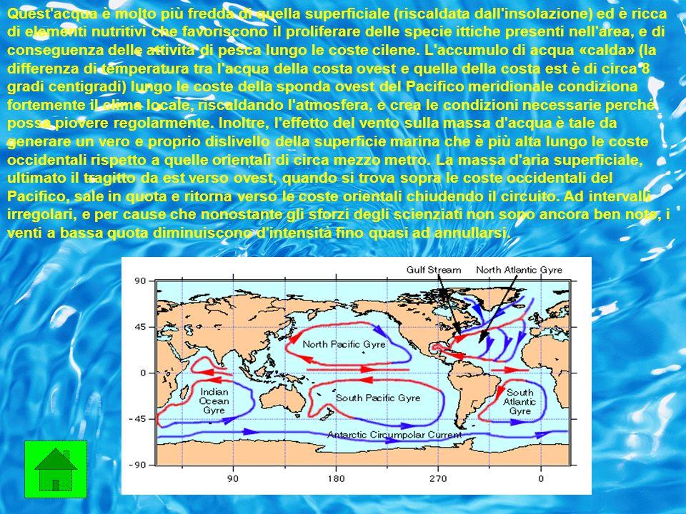 Tale situazione crea una serie di effetti strettamente collegati l uno agli altri: l acqua calda accumulata lungo le coste occidentali del Pacifico meridionale rifluisce verso oriente; l acqua che si trova lungo le coste cilene non venendo più trascinata verso occidente non consente alle acque profonde di risalire in superficie; la massa di aria umida che si trova normalmente al di sopra delle coste occidentali dell Atlantico si sposta verso il centro dell Atlantico; la circolazione del vento in quota ed al suolo si modifica radicalmente.