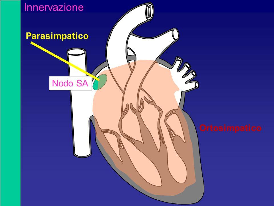 Nodo SA Parasimpatico Ortosimpatico Innervazione