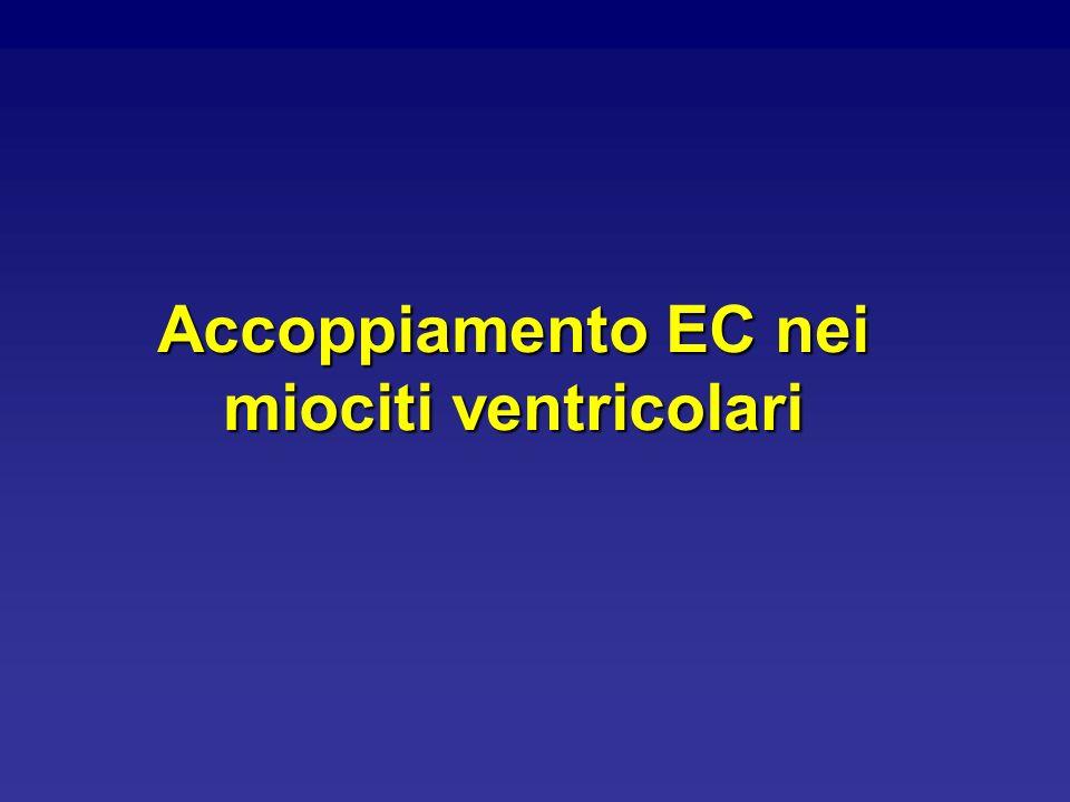 Accoppiamento EC nei miociti ventricolari