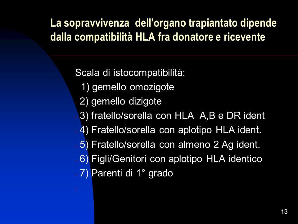 13 La sopravvivenza dellorgano trapiantato dipende dalla compatibilità HLA fra donatore e ricevente Scala di istocompatibilità: 1) gemello omozigote -